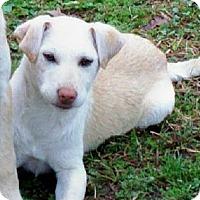 Adopt A Pet :: ALEXIS - Courtesy Post - Glastonbury, CT