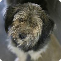 Adopt A Pet :: Tinley - Phoenix, AZ