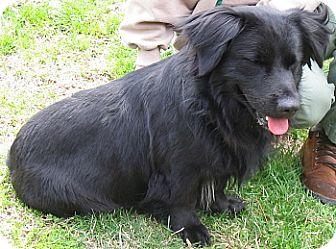 Spaniel (Unknown Type) Mix Dog for adoption in Dahlgren, Virginia - (no name)