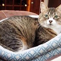 Adopt A Pet :: Petunia - Wasilla, AK