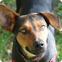 Adopt A Pet :: Peaches - Mebane, NC