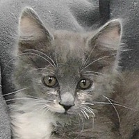 Adopt A Pet :: Gracee - Redondo Beach, CA