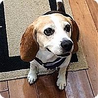 Adopt A Pet :: PupCake - Houston, TX