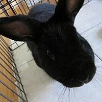 Havana Mix for adoption in Los Angeles, California - Onyx