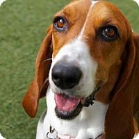 Adopt A Pet :: Macy - San Diego, CA