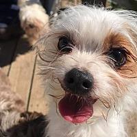 Adopt A Pet :: Oliver - Ashville, OH
