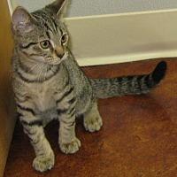 Adopt A Pet :: Gilley - Bedford, VA