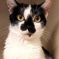 Adopt A Pet :: Dottie - Key Largo, FL