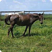 Adopt A Pet :: Gwen - Lyles, TN