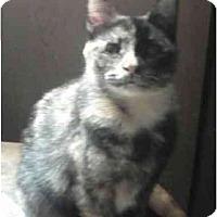 Adopt A Pet :: Sara - Milford, OH