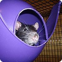 Adopt A Pet :: Tres - Greenwood, MI
