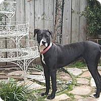 Adopt A Pet :: Jannie**courtesy listing** - Blanchard, OK