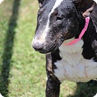 Adopt A Pet :: Melodie - Houston, TX