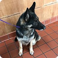 Adopt A Pet :: Lacey - Montgomery, AL