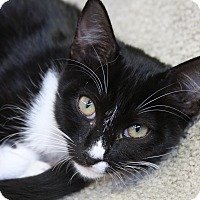 Adopt A Pet :: Emmeline - Sarasota, FL