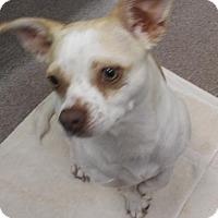 Adopt A Pet :: Kilo - Decatur, GA