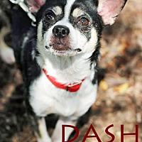 Adopt A Pet :: Dash-VIDEO! - Griffin, GA