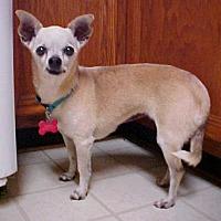 Adopt A Pet :: Juniper - 7 lbs. - Dahlgren, VA