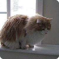 Adopt A Pet :: Pumpkin - West Dundee, IL