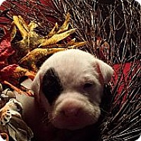 Adopt A Pet :: Katrina - Roaring Spring, PA