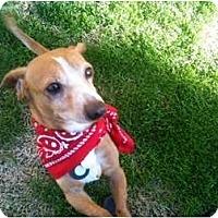Adopt A Pet :: Bandit - Rancho Mirage, CA
