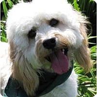 Adopt A Pet :: Frankie - Encinitas, CA