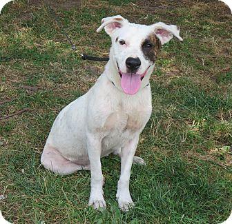Terrier (Unknown Type, Medium)/Terrier (Unknown Type, Medium) Mix Dog for adoption in Elizabeth City, North Carolina - Trina