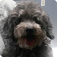 Adopt A Pet :: Betsy - Muskegon, MI