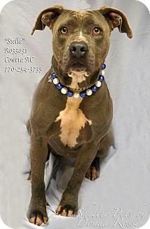 Pit Bull Terrier Mix Dog for adoption in Newnan City, Georgia - Stella