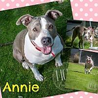 Adopt A Pet :: Annie - Jerome, ID