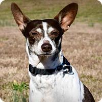 Adopt A Pet :: Fetch (VA) - Richmond, VA