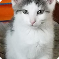 Adopt A Pet :: Ford - Colfax, IA