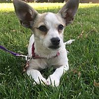 Adopt A Pet :: Jewel - Van Nuys, CA