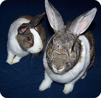Dwarf Mix for adoption in Alexandria, Virginia - Crissy & Stanley