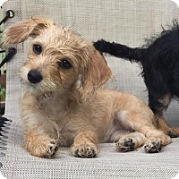 Adopt A Pet :: Summer - Fort Atkinson, WI