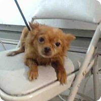 Adopt A Pet :: PD - Orlando, FL