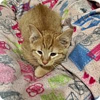 Adopt A Pet :: Marlon - Ashland, OH
