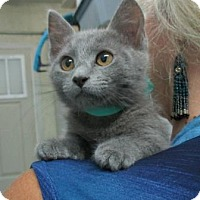 Adopt A Pet :: Bluebelle - Picayune, MS