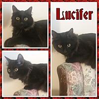 Adopt A Pet :: Lucifer - Cedar Springs, MI
