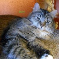 Adopt A Pet :: Kaycee - Oskaloosa, IA