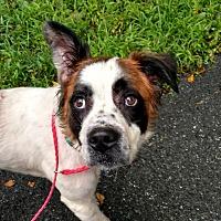 Adopt A Pet :: Kimbo - Pottsville, PA