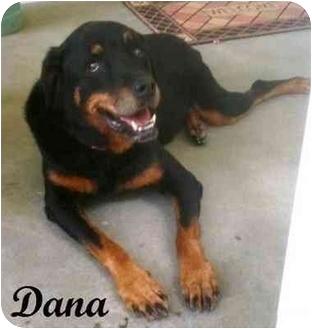 Rottweiler Dog for adoption in Darlington, Maryland - Dana