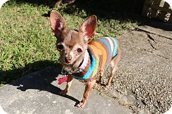 Chihuahua Mix Dog for adoption in New Orleans, Louisiana - Ethyl Louise