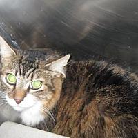 Adopt A Pet :: Gunner - Roseville, CA
