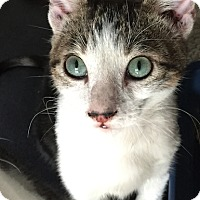 Adopt A Pet :: Timmy - Santa Monica, CA