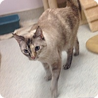 Adopt A Pet :: Pearl - Newport Beach, CA
