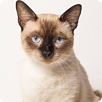 Adopt A Pet :: Kusa - N. Billerica, MA