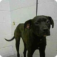 Adopt A Pet :: ABLE - Atlanta, GA