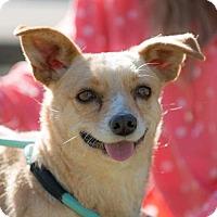 Adopt A Pet :: POLO - Irvine, CA
