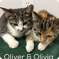 Adopt A Pet :: Olivia - Great Neck, NY